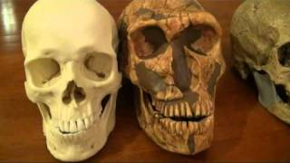 getlinkyoutube.com-Comparison of Modern Human, Cro-Magnon and Neanderthal - Part 1