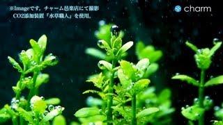 getlinkyoutube.com-【charm】CO2添加装置『水草職人』のセット方法