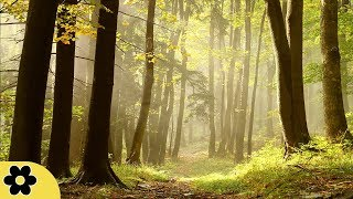 Healing Music, Meditation Music Relax Mind Body, Relaxing Music, Slow Music, ✿3276C