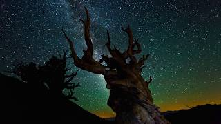 getlinkyoutube.com-Nature at Night [4K][3840p]
