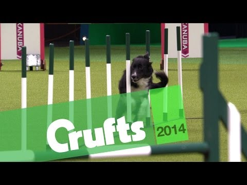 Agility | Jumping | Large Dogs Winner | Crufts 2014