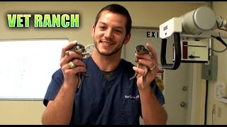 Orphaned Baby Squirrels Rescued