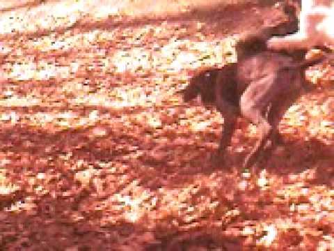 TVG-9 Walki psów w trójmiejskim lesie;)