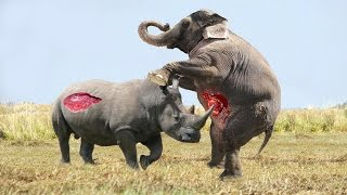 getlinkyoutube.com-Elephant vs Rhino Real Fight - Animal World - Animals Fight