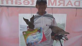 Pitung in slow motion @ lomba merpati kolongan Kemiling Open Cup 4
