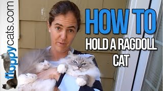 flushyoutube.com-How to Hold a Ragdoll Cat - How to Pick Up a Ragdoll Cat - ねこ - ラグドール - Floppycats