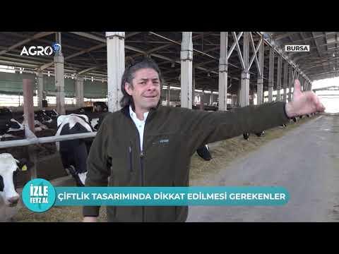 Süt Çiftliği Mimarisi... Dikkat Edilmesi Gerekilenler