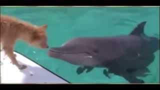 getlinkyoutube.com-un dauphin sauve un chien des mâchoires d'un requin