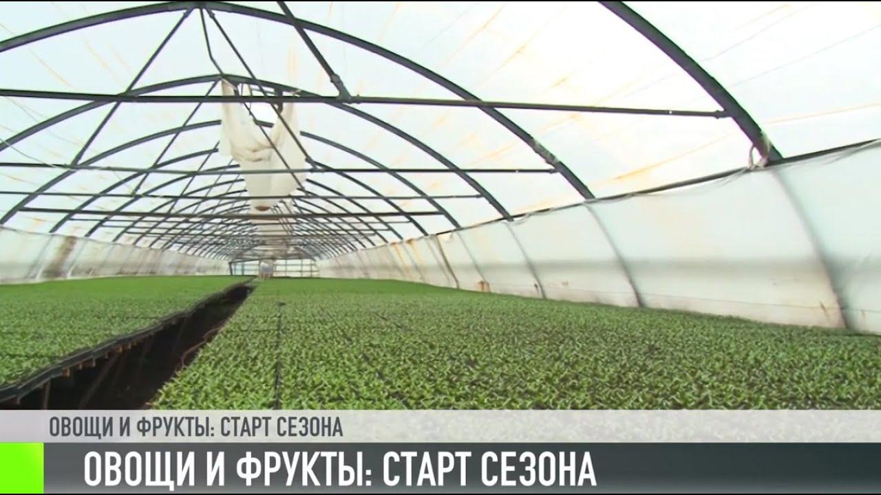 Приднестровские овощи и фрукты: старт сезона