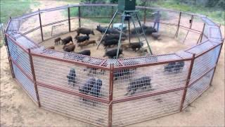 getlinkyoutube.com-30' Hog Trap T A C  Trap 2013