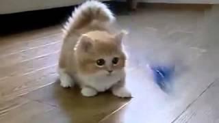 getlinkyoutube.com-Прикольный рыжий котенок