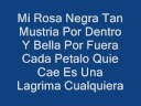 Porta-Mi Rosa Negra (Letra)
