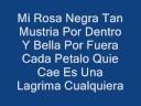 Porta-Mi Rosa Negra (Letra)