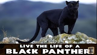 getlinkyoutube.com-Panther Simulator -PART 1- By Gluten Free Games -Compatible with iPhone, iPad, and iPod, Android