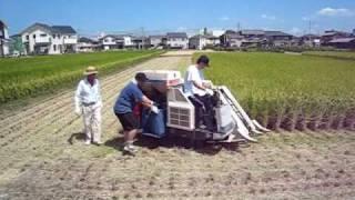 getlinkyoutube.com-Rice Harvesting in Japan