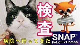 【猫・里親募集】保護猫ケンちゃん♡初めての動物病院!?検査の結果は…【置き去りにっされた猫ちゃん8】Cat Video - Feral cat rescue.