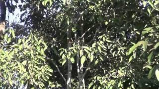 getlinkyoutube.com-แห่ดูต้นไม้เต้นระบำ ที่ หนองคาย  ชาวบ้านวิ่งหาเลขเด็ด