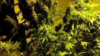 getlinkyoutube.com-How to get high yields: environment importance