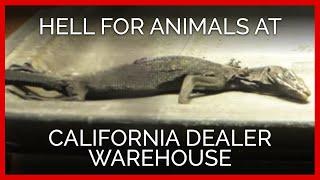 getlinkyoutube.com-Investigation Reveals Hell on Earth for Animals at California Dealer Warehouse