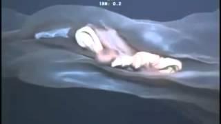 getlinkyoutube.com-Im Ozean - Was ist das für eine seltsame Kreatur?
