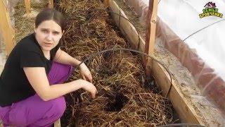 Семья Бровченко. Огород. Посадки в теплице (ч.2) - горошек, огурцы, редиска.