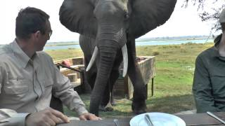 getlinkyoutube.com-Zimbabwe Bull Elephant Crashes Into Tourists at Mana Pools