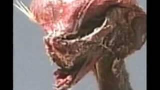 getlinkyoutube.com-CHILE OXYAZTLAN OXLACK Alien EBES EBE Human Alien Hybrid Real Alien