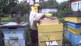 getlinkyoutube.com-Выемка рамок с медом