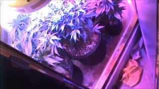 getlinkyoutube.com-90w UFO LED Grow lights side by side comparison