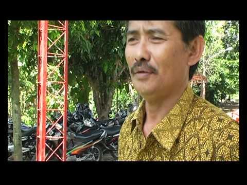 Suara Ayam Hutan Hijau di Hutan Buatan FIP-UNNES kampus Sekaran Semarang ( Lanjutan)