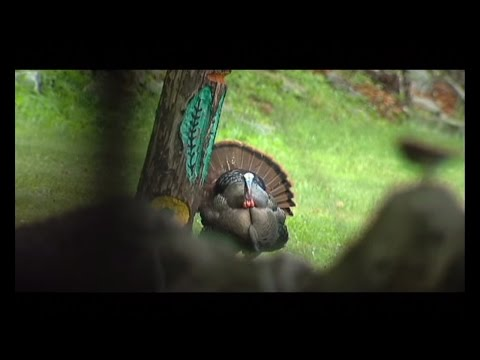 Vermont Turkey Hunt
