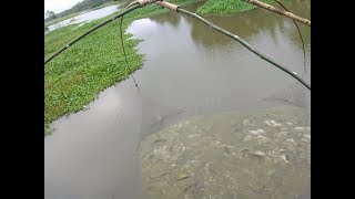 Rainy Day net fishing by villagers - Amazing fishing video in India