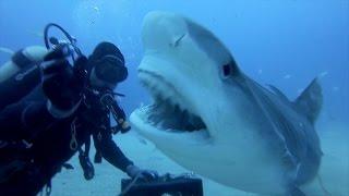getlinkyoutube.com-GoPro: Petting A Tiger Shark
