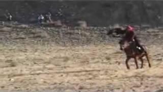 getlinkyoutube.com-Golden Eagle Killing wolves.