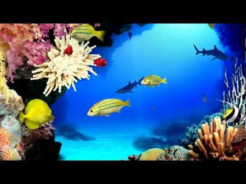 Virtual Aquarium HD (1080p)