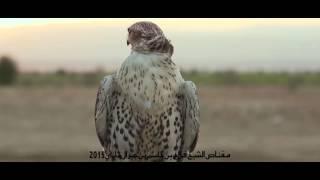 getlinkyoutube.com-صقر الشيخ فلاح يصيد غزال