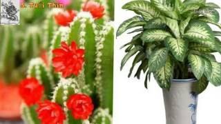 getlinkyoutube.com-12 loại cây mang tài lộc vào nhà theo tuổi của gia chủ