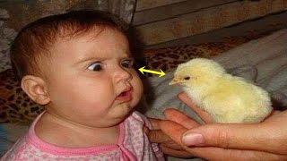 ★দেখুন মুরগির বাচ্চার সাথে কি করছে   KIDS PLAYING WITH CHICKENS ★ Babies Love Chicken