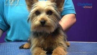 getlinkyoutube.com-Grooming Guide - Yorkshire Terrier Puppy Trim - Pro Groomer
