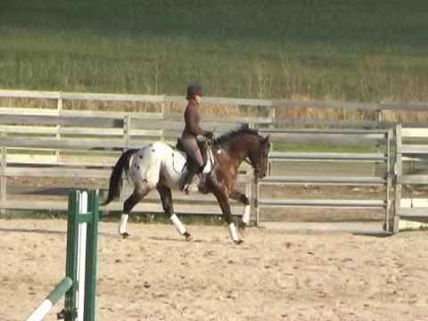 Hollywood Hot Spot - 2004 Appaloosa Sport Horse Stallion