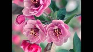 getlinkyoutube.com-อรุณสวัสดิ์วันอังคาร  -  ดอกไม้กำลังใจ