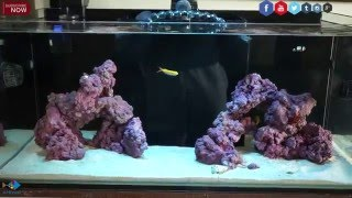 getlinkyoutube.com-How to Start a Reef Aquarium The Right Way