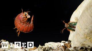 getlinkyoutube.com-Mantis Shrimp Fight Club