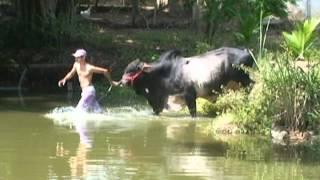 getlinkyoutube.com-Sim Brasil Notícias - Animal de estimação que pesa 900 kg