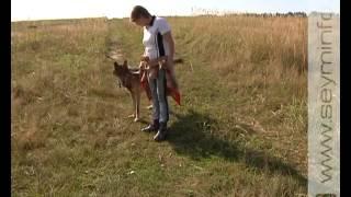 getlinkyoutube.com-Курский фермер вырастил волка