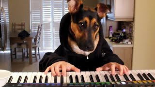 getlinkyoutube.com-16 Funny Pets Video Compilation 2016