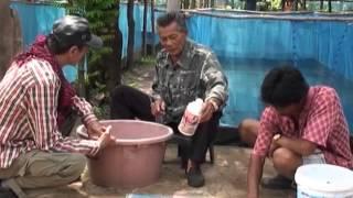 getlinkyoutube.com-เลี้ยงปลาดุก ในกระชังบก  ลุงชิต