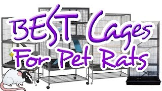 getlinkyoutube.com-EXCELLENT Cages for Pet Rats | All About Rat Cages: Episode 3