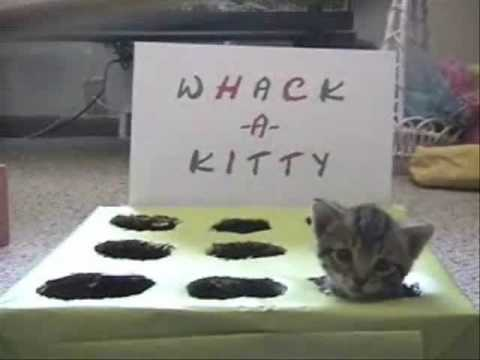 Whack-A-Kitty