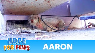 getlinkyoutube.com-Hope For Paws: Homeless sick dog living under cars for 7 months - finally saved!  Please share.